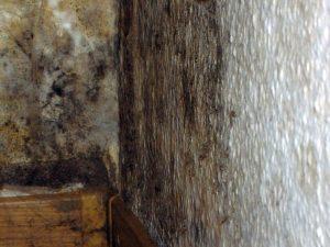 Nahaufnahme Schimmelbefall Außenwandecke über Keller (Schlafraum)
